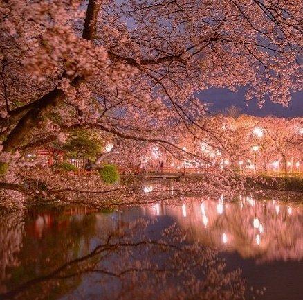 富士山脚下的樱花夜景