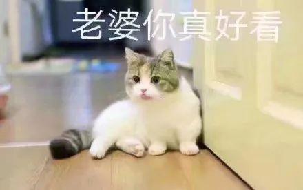 表情包:可爱猫咪撒娇表情包图片