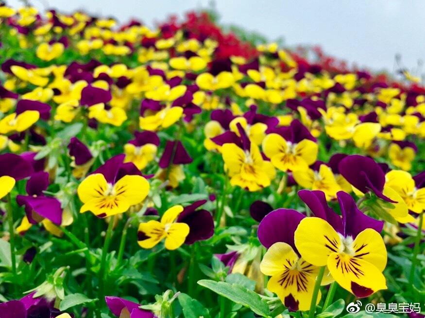 五月 开遍大地的鲜花 任性而美丽
