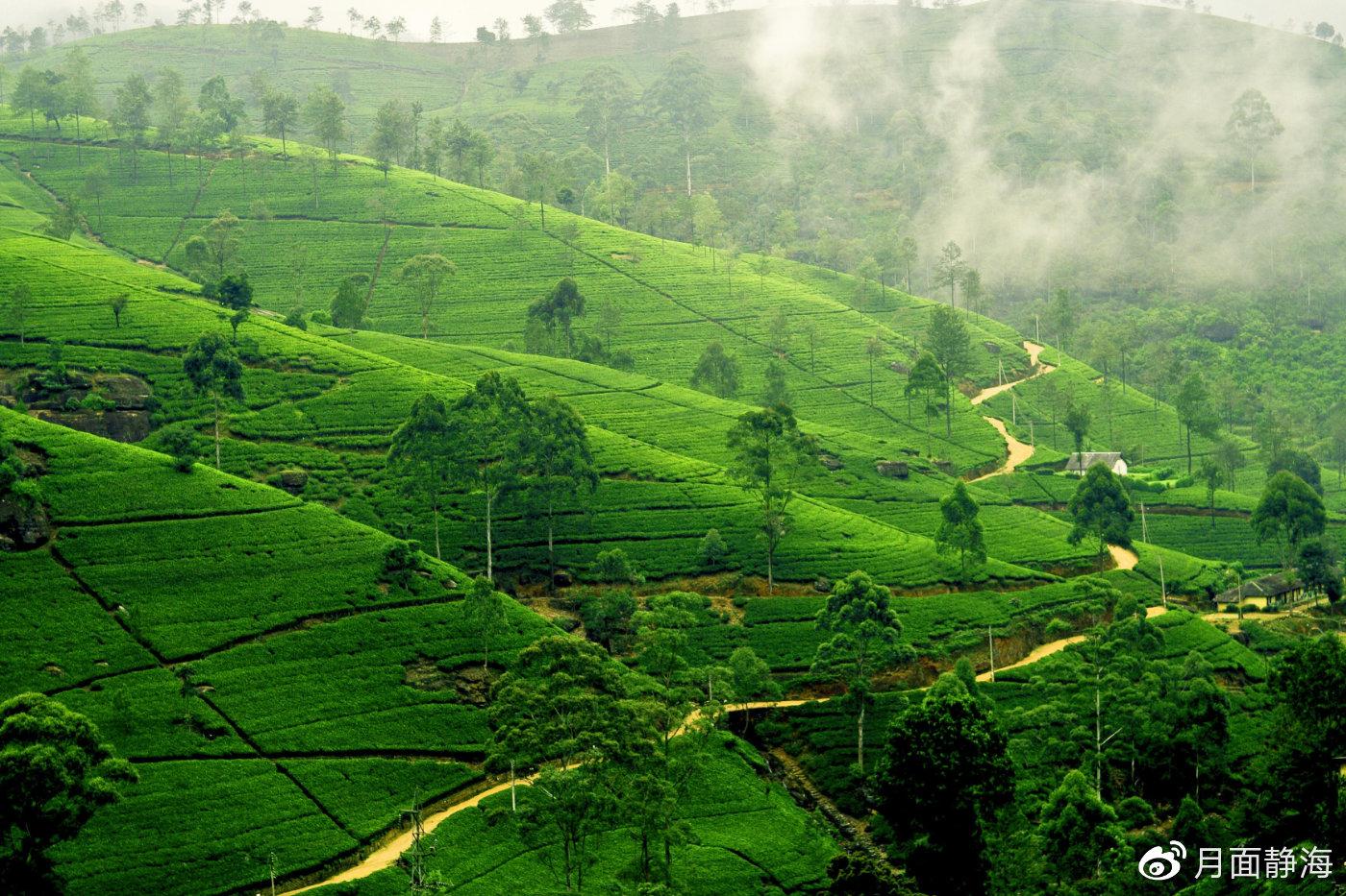 斯里兰卡|不止高山茶园、野生动物和古城,探索印度洋小岛的N种玩法