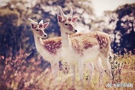 日本奈良如精灵般的小鹿