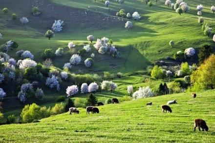 伊犁那拉提草原 打滚好地方