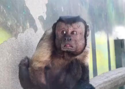 苹果长了一张国字脸,动态v苹果人称,其实是动手机那个表情弄表情包怎么猴子图片