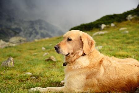 骑车拖死小狗:善待动物才是人性所在