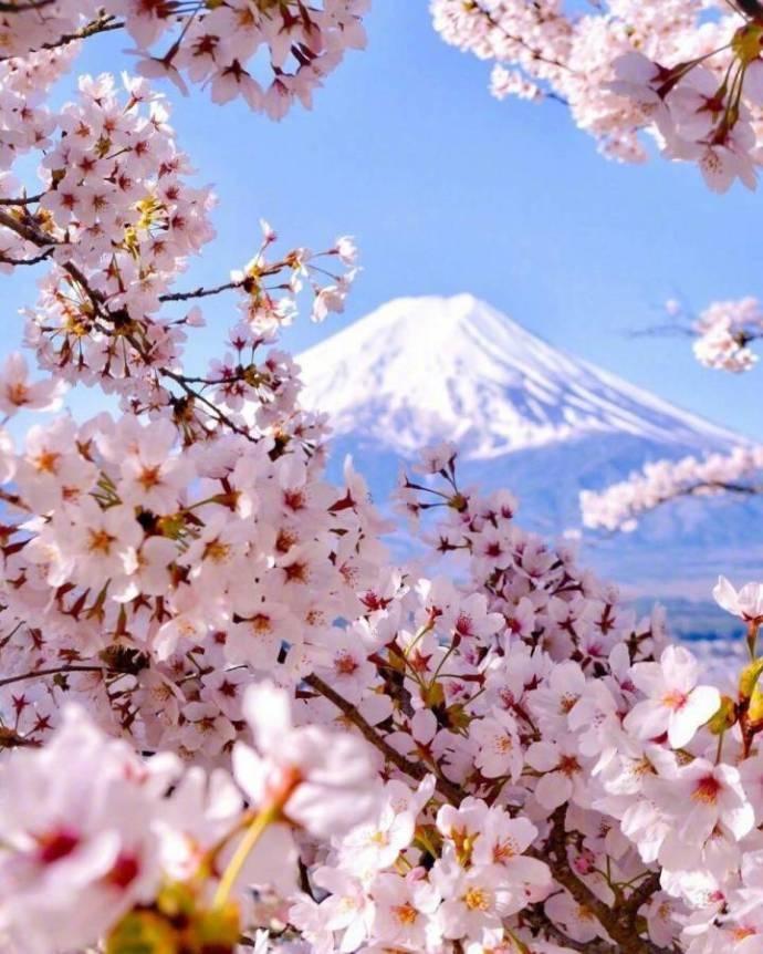 樱花与山川交融的自然之美