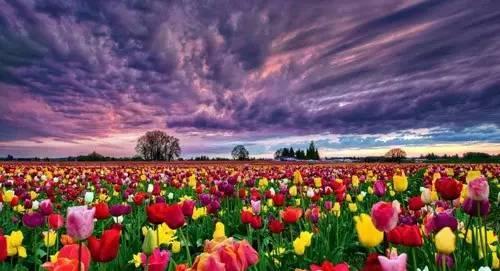 四川西南航空职业学院给师生放6天春假:去赏花、去恋爱!