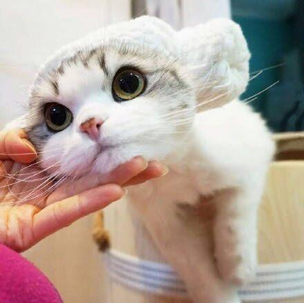 超萌的小猫咪图片大全 超萌可爱猫咪图片大全