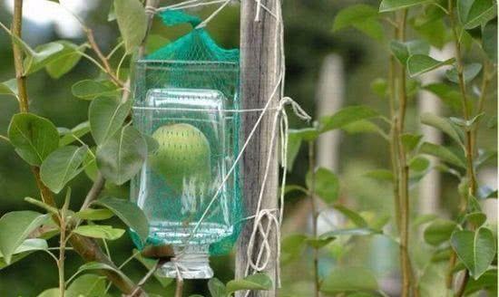 一个完整的梨是怎么被装进酒瓶里的?这些人真是太聪明了!