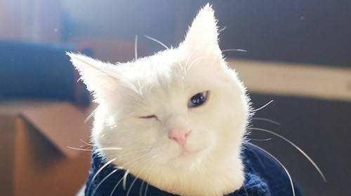 公猫发情的特征 踩奶图片