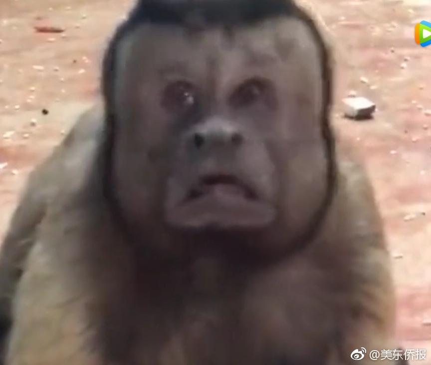 王思聪的熊猫互娱进入破产程序 拟开债权人会议
