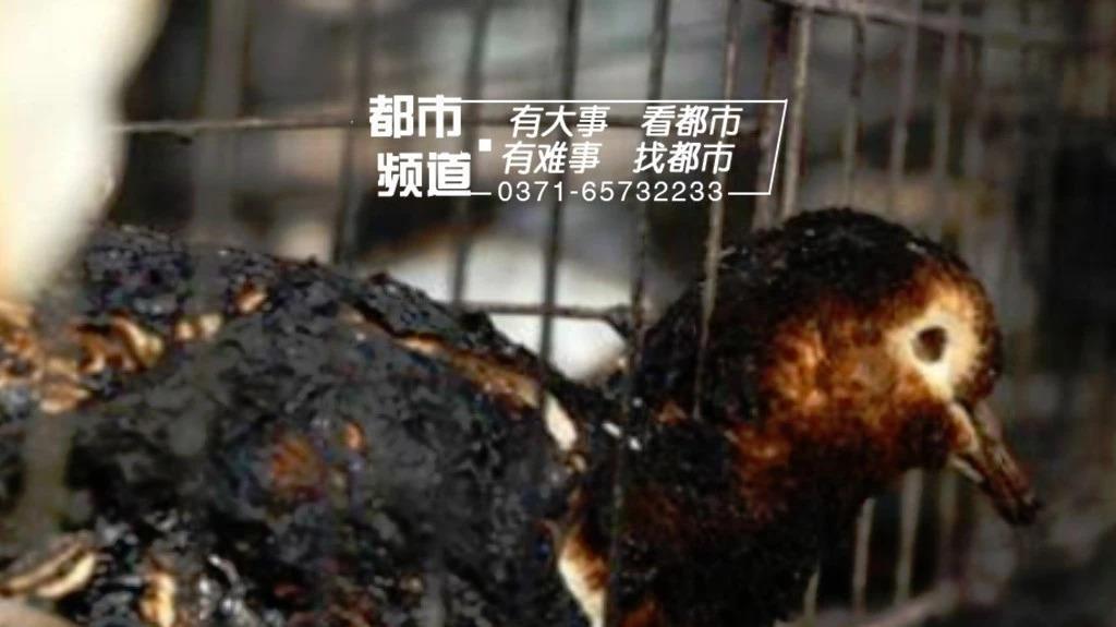 惨!郑州一场大火数千信鸽葬身火海 损失高达百万元