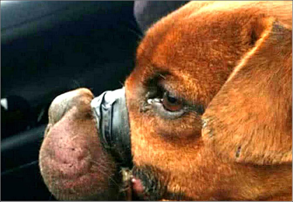 流浪狗被主人用胶带绑住嘴巴抛弃,好心人解开胶带后,瞬间泪崩了