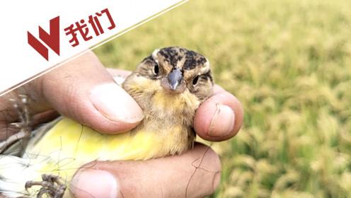 仅13年 这种鸟被中国食客从到处可见吃到濒临灭绝