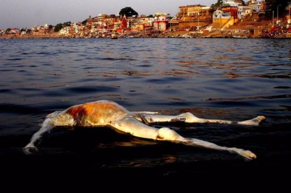 印度恒河有多脏?看完秒懂!