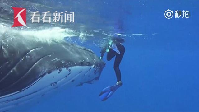 潜水遇鲨鱼 危急时刻巨鲸
