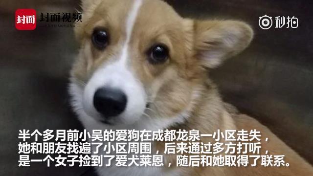 女子疑索酬不成摔死小狗 邻居:强烈要求她搬走