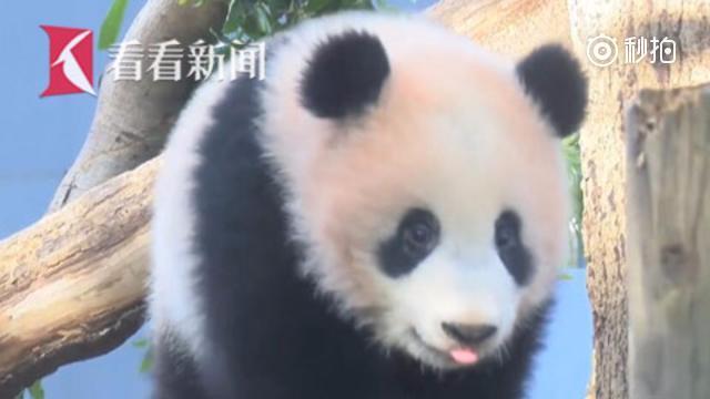 日本上野动物园延长