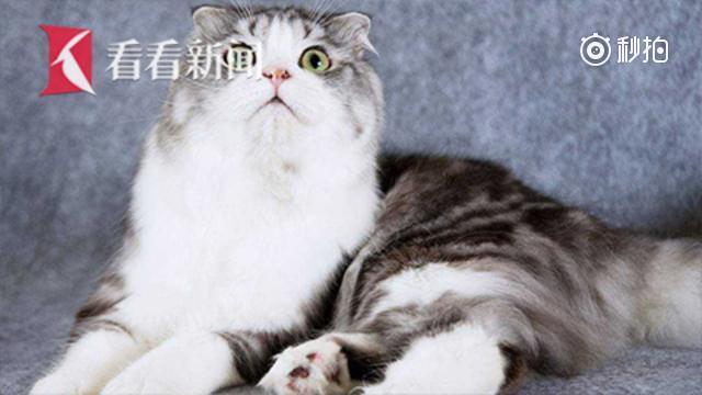 日本公布首个喂猫感染传染病死亡案