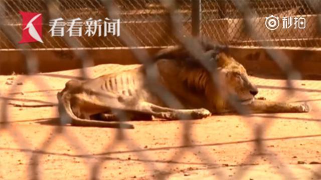 """【委内瑞拉动物园无钱喂养 被迫采取""""弱肉强食""""】"""