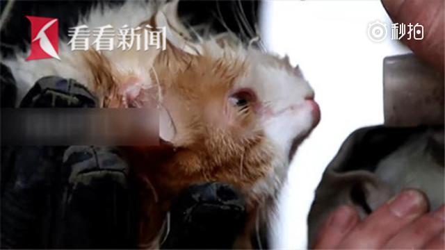 俄罗斯消防员做心肺复苏+吸氧救活猫