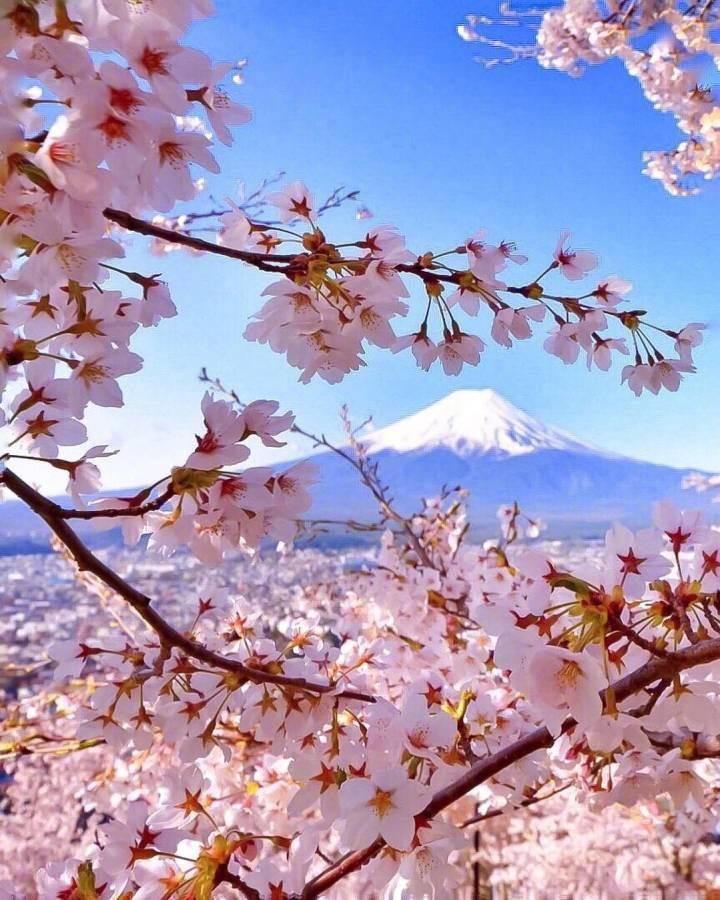 富士山?;?,真美