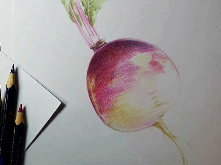 萝卜彩铅手绘教程
