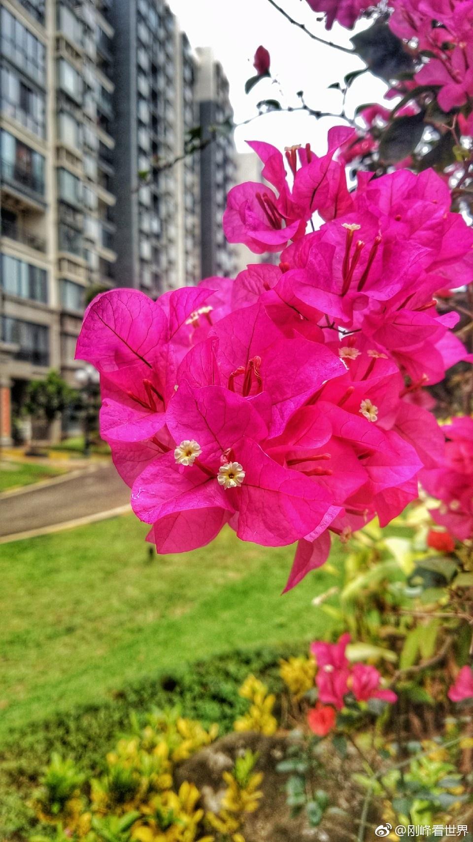 花是春天的符号