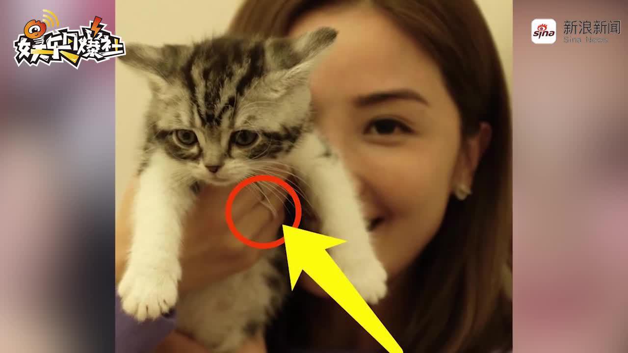 视频:阿Sa晒自拍介绍宠物猫无名指戒指泄漏婚讯