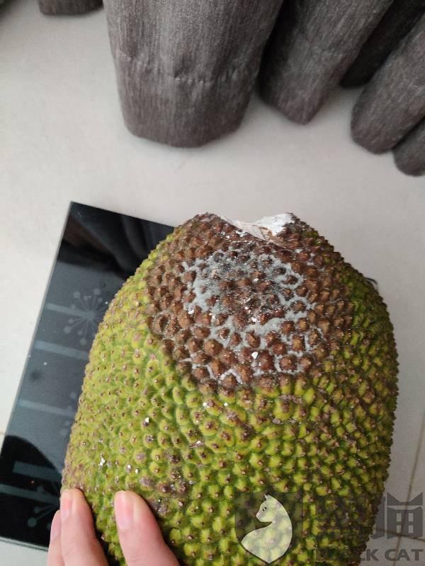黑猫投诉:天猫六井旗舰店 购买菠萝蜜 寄了个斤数不足的烂果 客服不肯回复 退款不予处理
