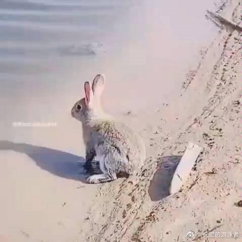 据说所有哺乳动物天生都会游泳,除了人类