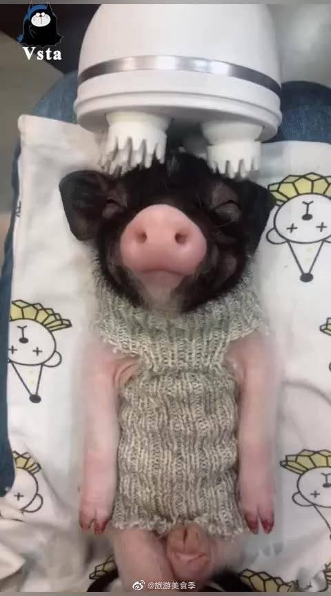 猪猪女孩必备口红色号:春夏斩男色,你想拥有吗?哈哈哈哈哈!