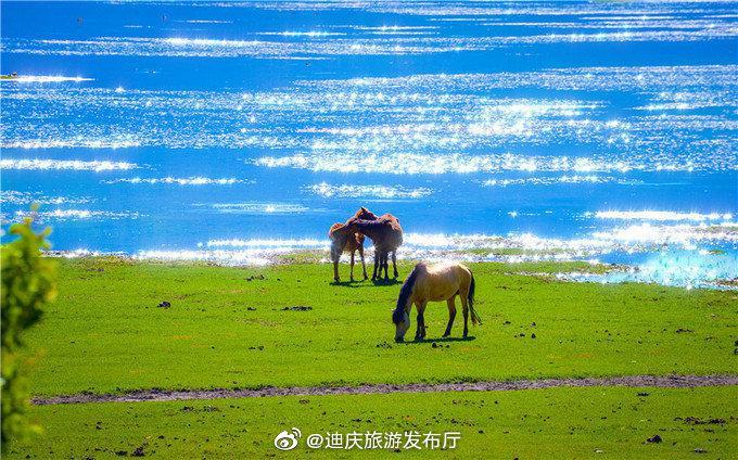 香格里拉最风情万种的地方,旱季她是绿草青葱的依拉草原