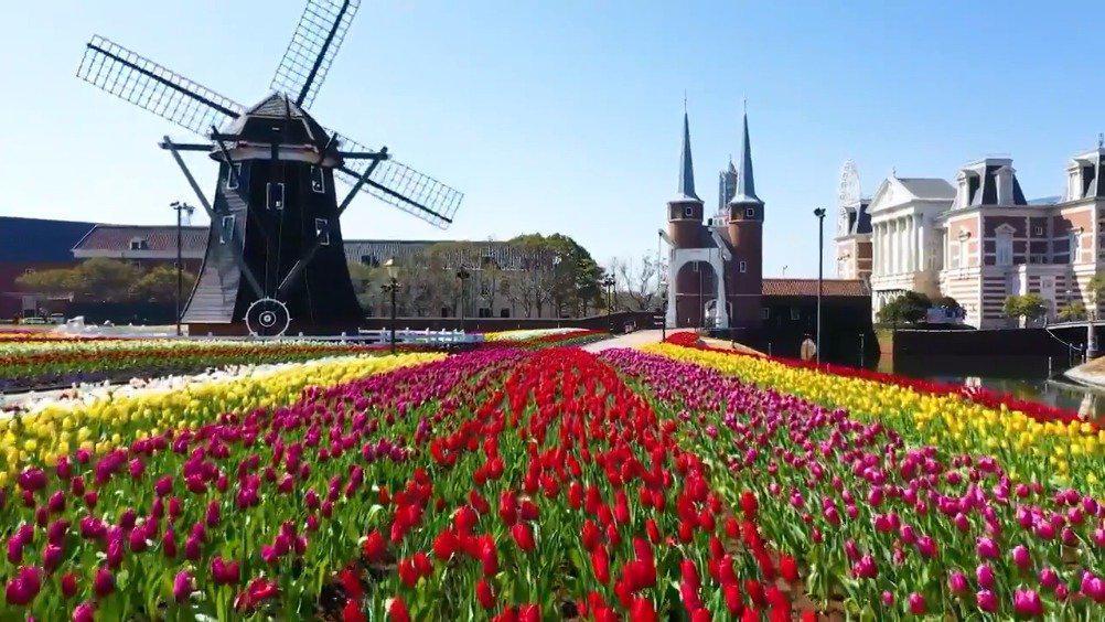 长崎县佐世保市的豪斯登堡正在举办大郁金香节