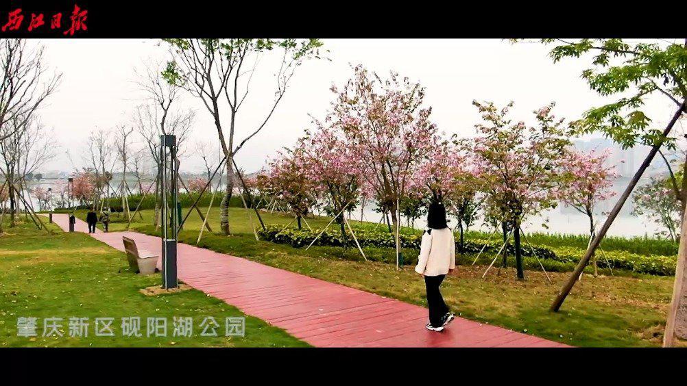 美丽肇庆  春天的肇庆新区,太美了!视频:李志斌制作
