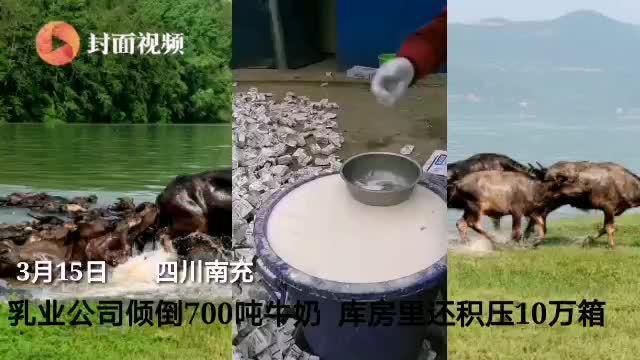四川一乳业公司700吨生鲜奶和临期乳制品无奈成饲料