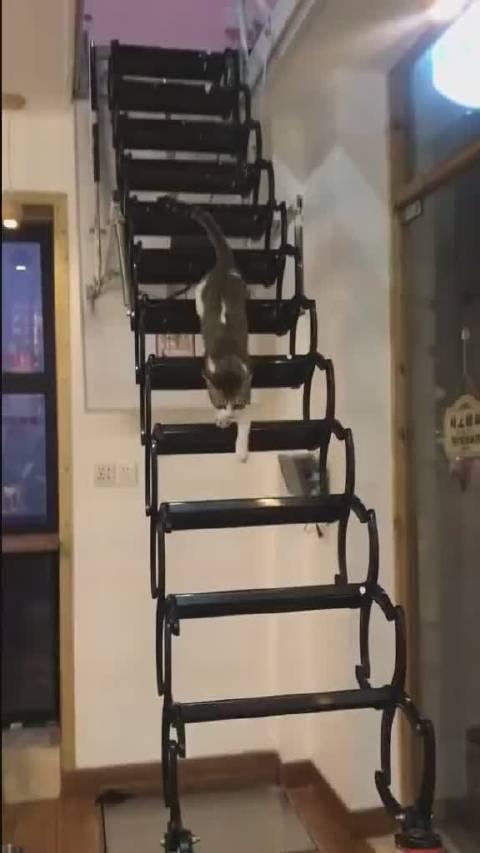 哈哈,猫咪必须得是大长腿才可以走这个梯!!