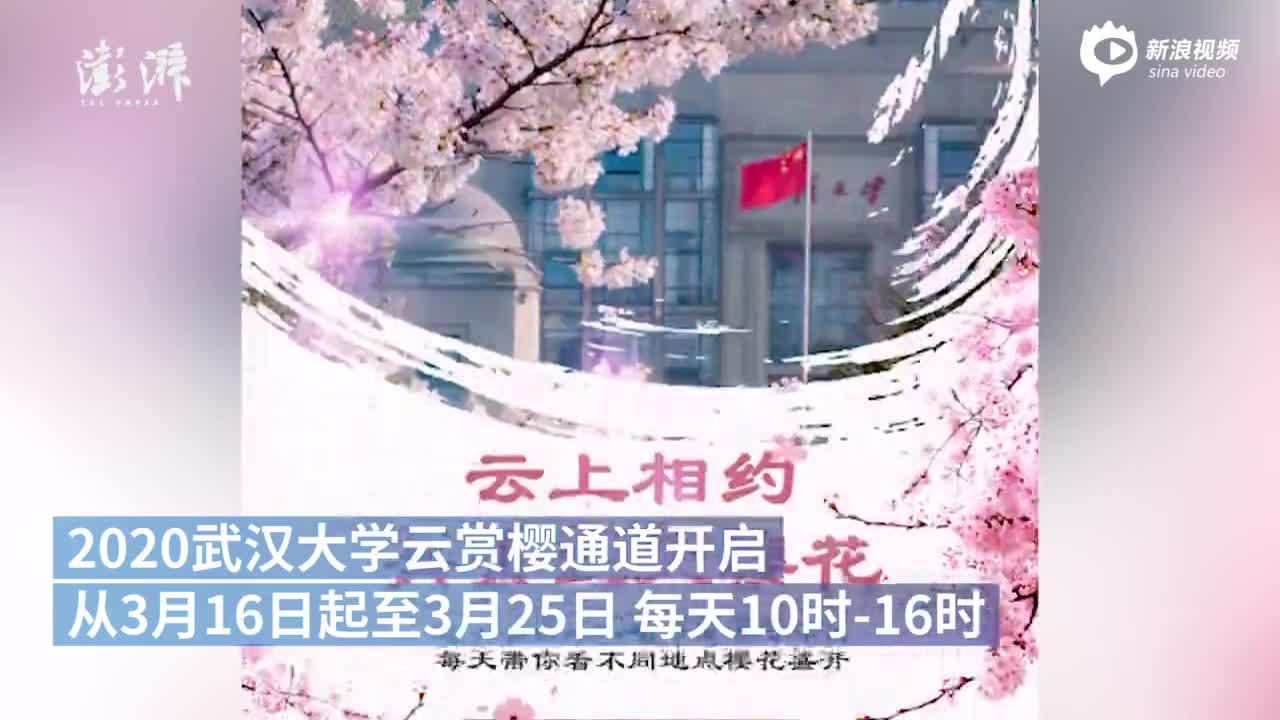 """武大""""云赏樱""""开启 十天看不同地点樱花"""
