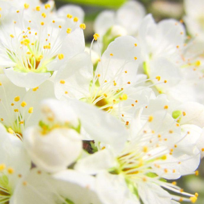跨过去,春天不远了,我永远不要失去发芽的心情。—— 林清玄