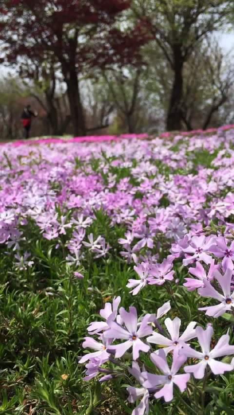 新冠肺炎疫情后重新开园的南通洲际绿博园,草长莺飞、花团锦簇