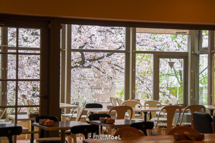 靠窗的座位旁边就是樱树,盛开的时节真是美得不可方物