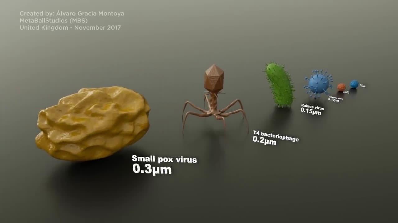 看看病毒和细菌的大小,最后最大的参照物青蛙卵子
