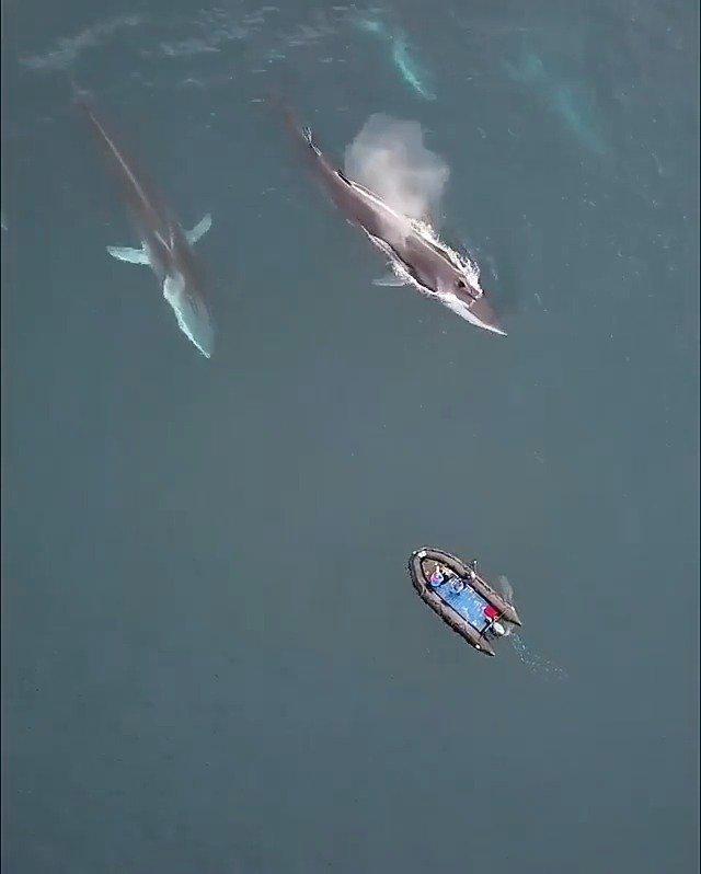 在格陵兰岛遇见鲸群,好美的画面!
