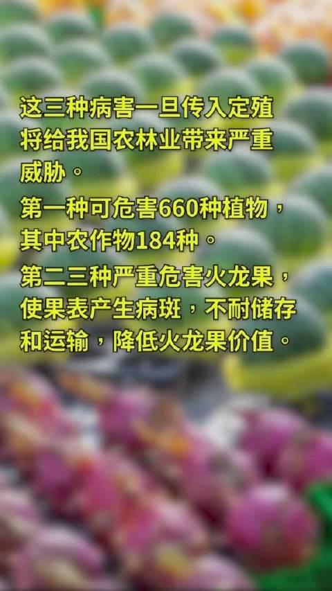 从越南进口的西瓜火龙果 检测出三种有害病原真菌