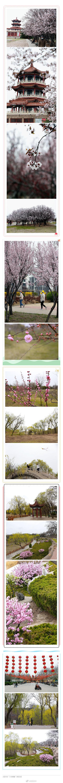 春之韵|大美凤城,这边风景独好!