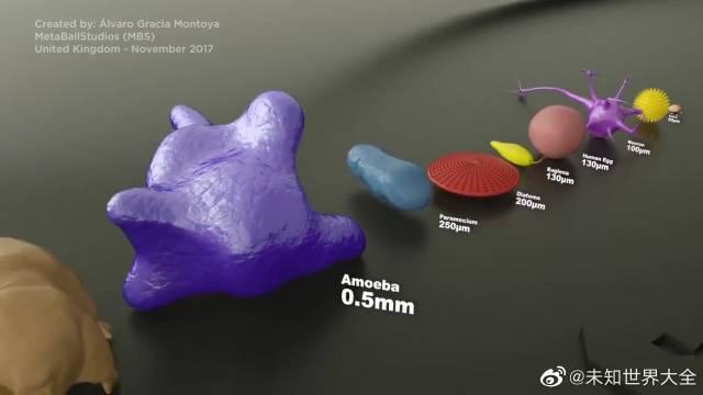 这个很直观了!看看病毒和细菌的大小,最后最大的参照物青蛙卵子