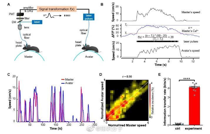 """罗敏敏组建立新型脑-脑接口实现""""阿凡达""""式的跨鼠遥控"""