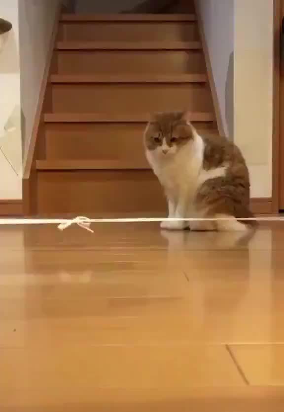 因疫情无法出门的我...开始遛猫...by/twitter/0123456789zen