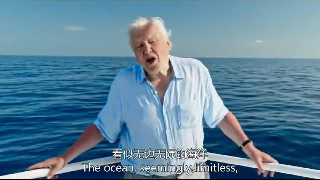 BBC纪录片《蓝色星球2》 该片经过长达4年的拍摄