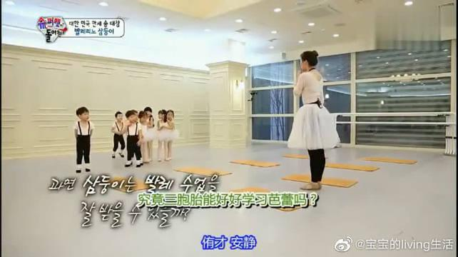 这次是小天鹅三胞胎,学习芭蕾舞被夸奖了!万岁找到同伴了!