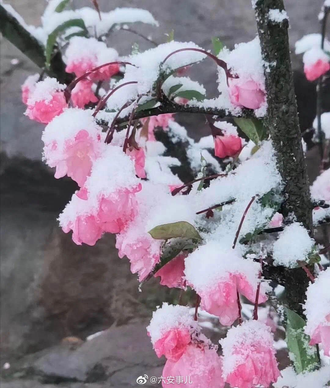霍山下雪了!欣赏一波雪景